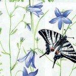 Флора белый